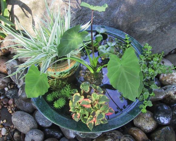 Pond Container Garden