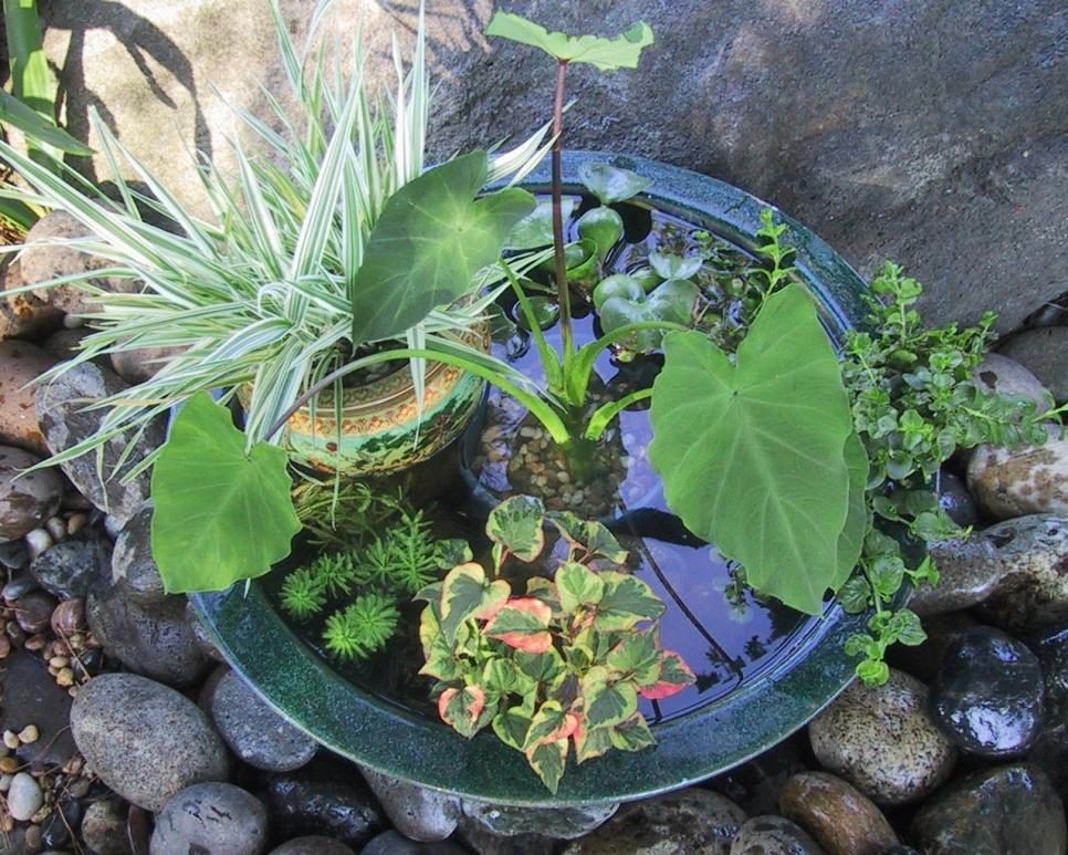 10 refreshing container water features hgtv for Garden pond water features