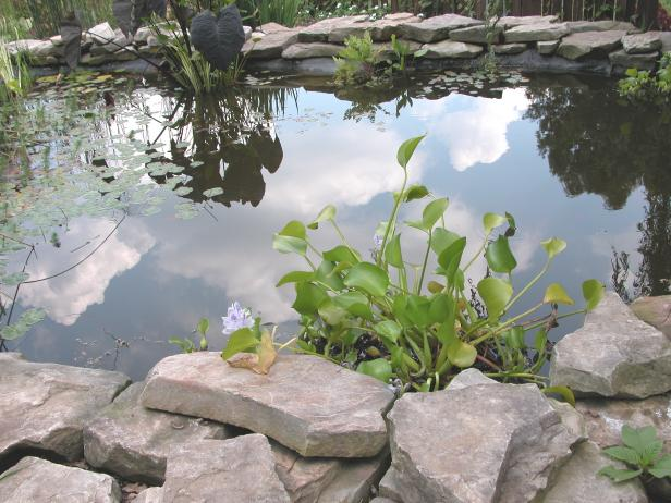 focus_pond