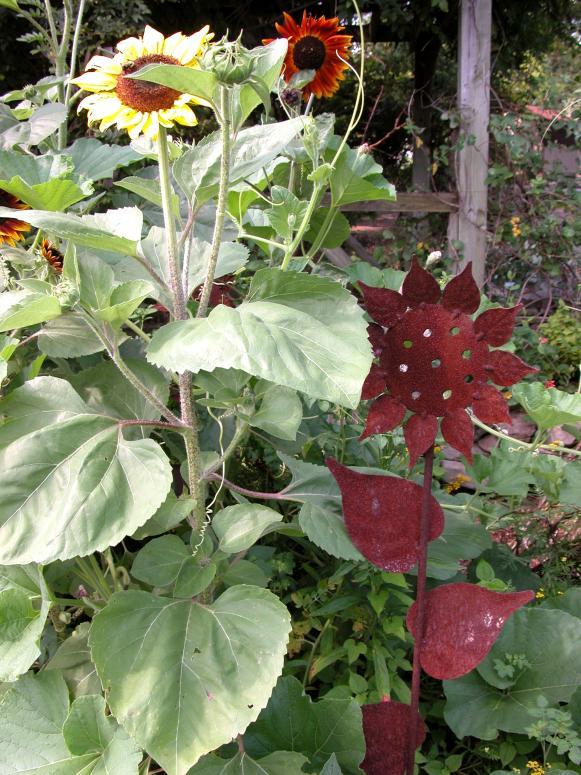focus_sunflower_sunflowerart