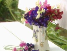 gby1303_2a_sweet_pea_in_container