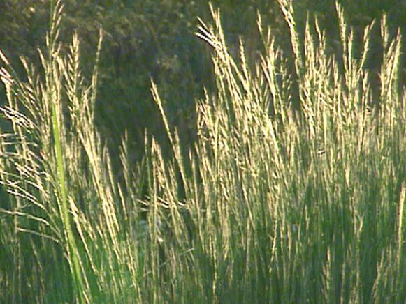 gby1304_3i_grasses2