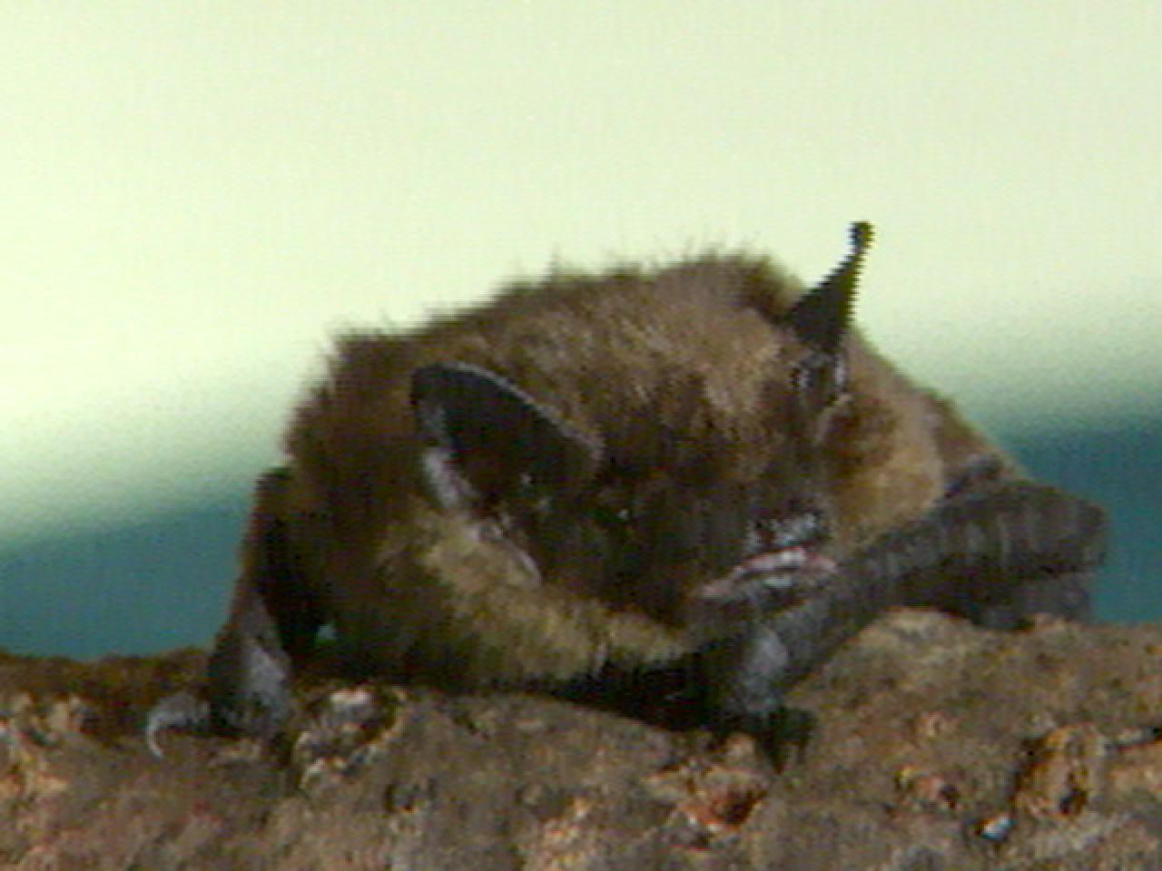inviting bats to your yard hgtv