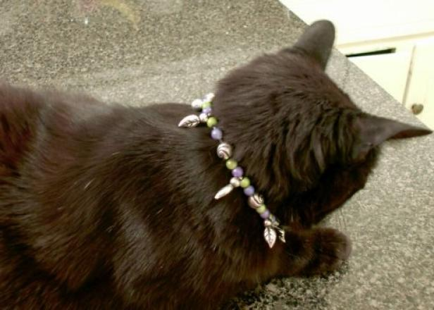 Make A Beaded Necklace For Cats Hgtv
