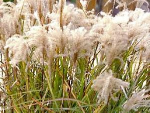 grass_sentinel_walters2