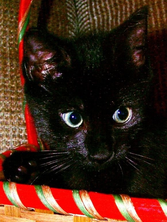 photo-tips-mhaley-black-cat-in-basket