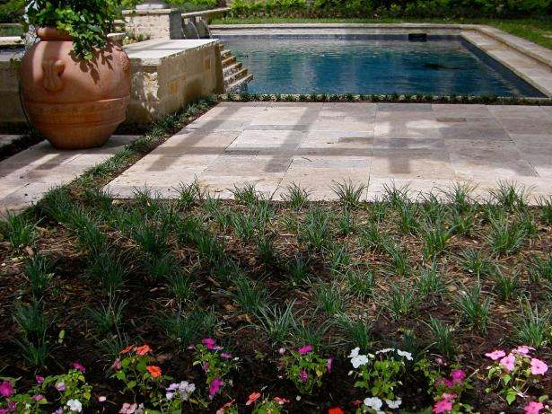 Poolside Garden With Grasses and Cement Walkway
