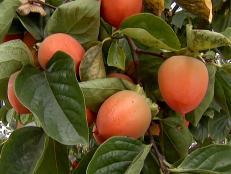 gby1911_1-fruit_s4x3