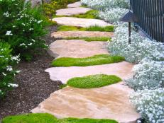 Stone Path Walkway With Irish Moss