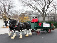 Horse-Drawn Wagon Delivering White House Christmas Tree