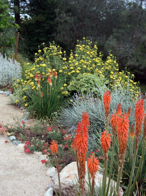 Southwestern Red and Yellow Garden