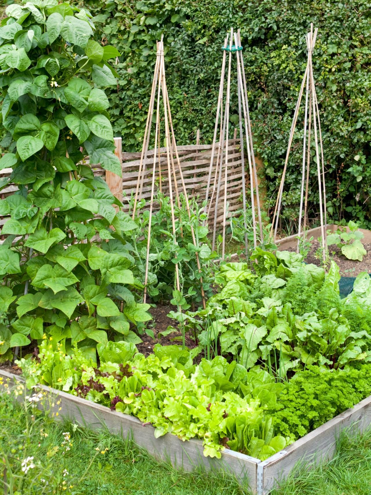 How to build a raised vegetable bed hgtv for Vegetable patch ideas