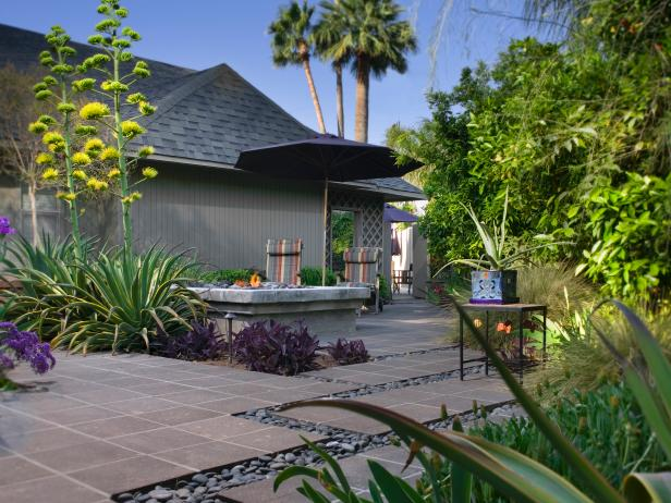 Contemporary Outdoor Area With Palm Trees and Yucca