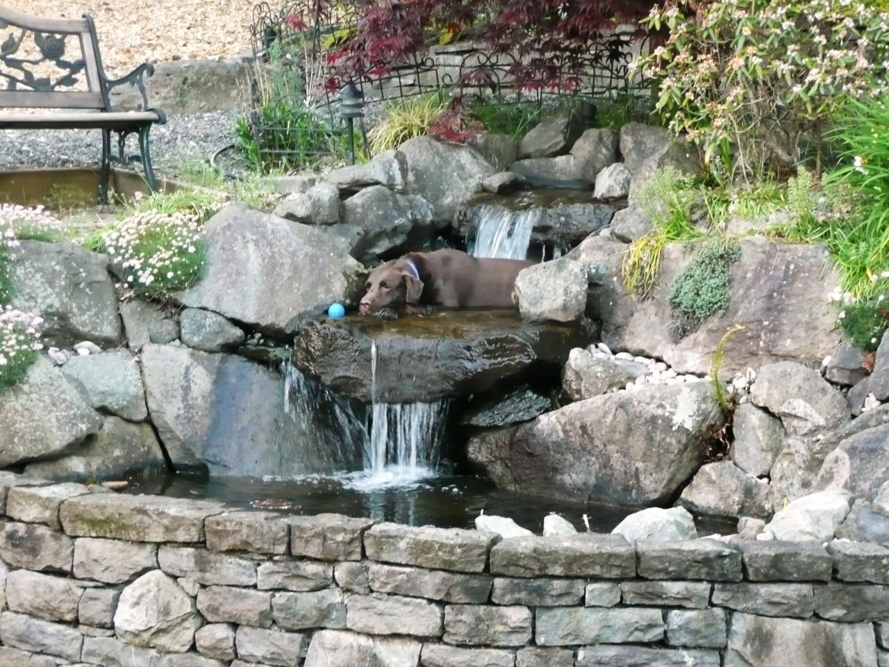 Our favorite garden ponds from hgtv fans landscaping for Pond water features