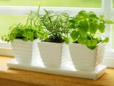 Herbs on Windowsill