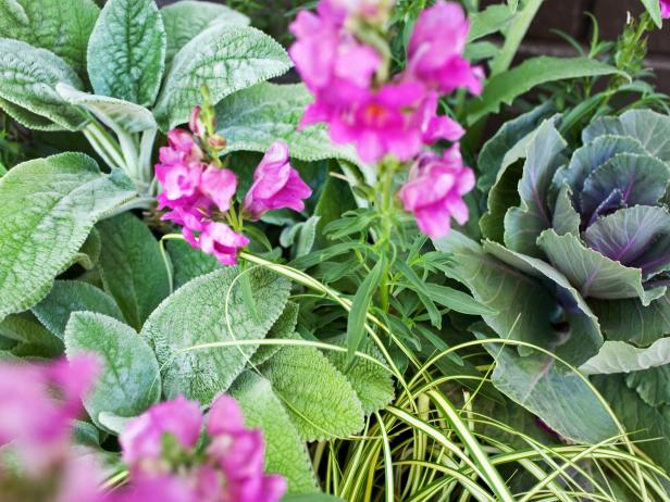 Arrange Plants in Mobile Container Garden