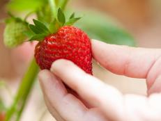 Delicious Picked Strawberry