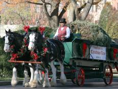 Christmas Carriage Delivers White House Christmas Tree