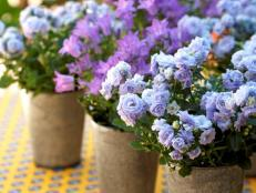 Purple Potted Flowers on a Table