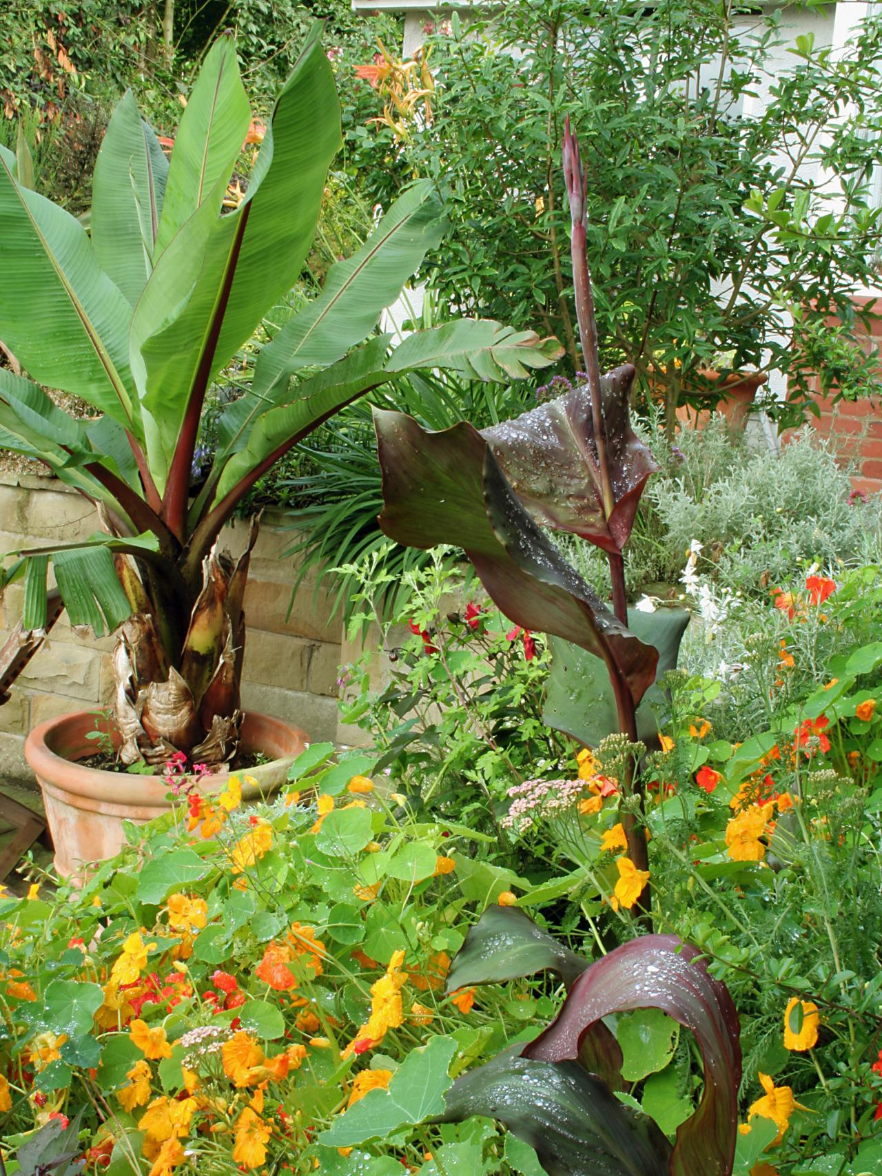 Container Garden Design phormium and succulent pots by hyland garden design Plants Add Jungle Feel To Garden