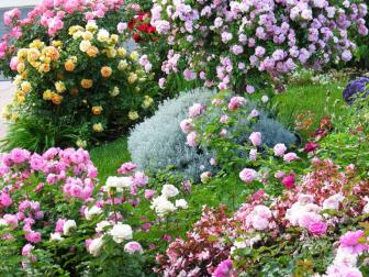 Rainbow Rose Garden