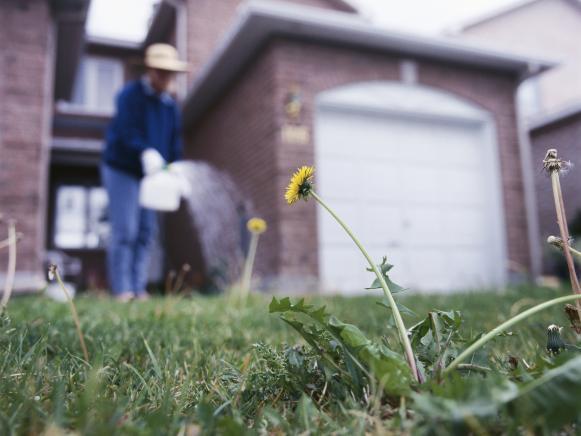 Killing Weeds