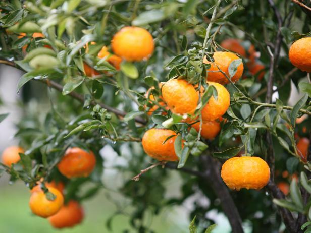 Grow a Fruit Tree