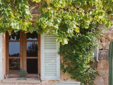 Create Shade With Window Vines
