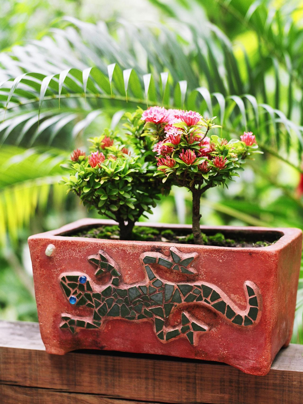 How to decorate with miniature roses hgtv for Outdoor decorating with potted plants