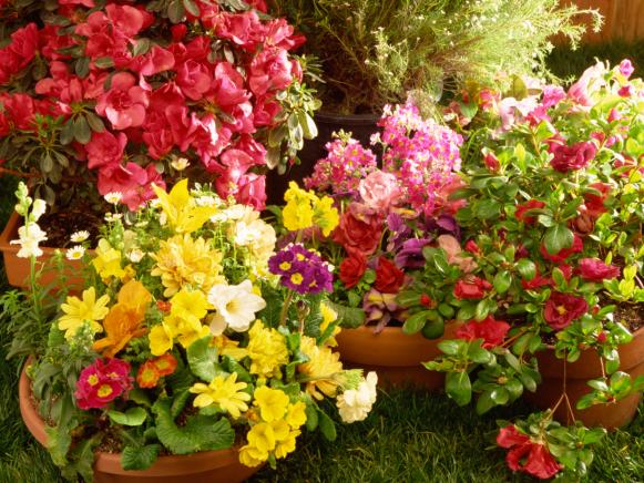 Container Flower Garden with Variety