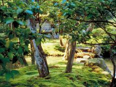 Mossy Woodland Landscape