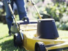 Get Your Yard Shipshape