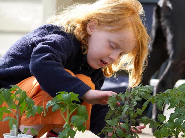 Child Planting Tomatoes