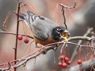 For the Birds: How to Attract Wildlife in Winter