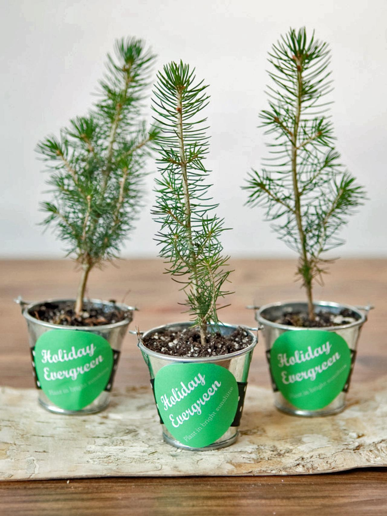 make evergreen tree holiday party favors hgtv