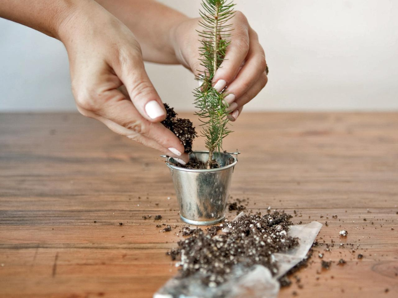 how to make evergreen trees