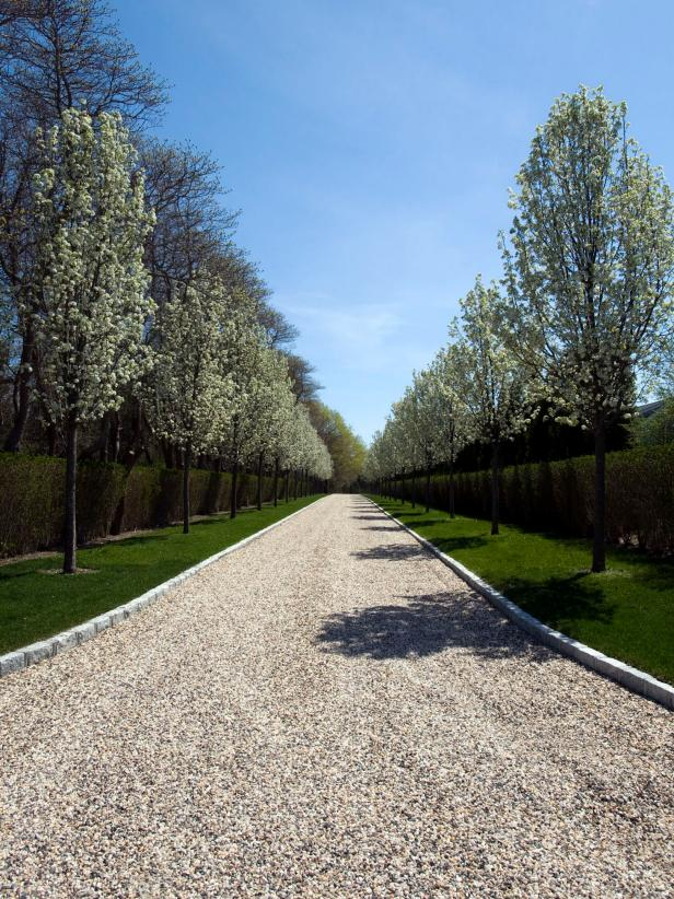 Callery Pear Trees Lining Tuscan Entryway