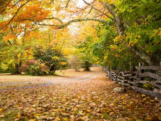 Mountain Hiking Trail with Vibrant Fall Foliage