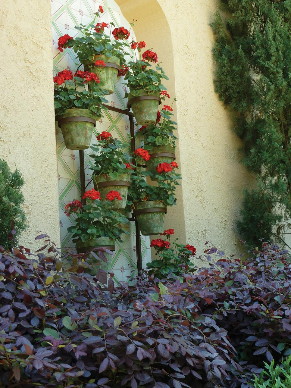 Search viewer hgtv - Care geraniums flourishing balcony porch ...