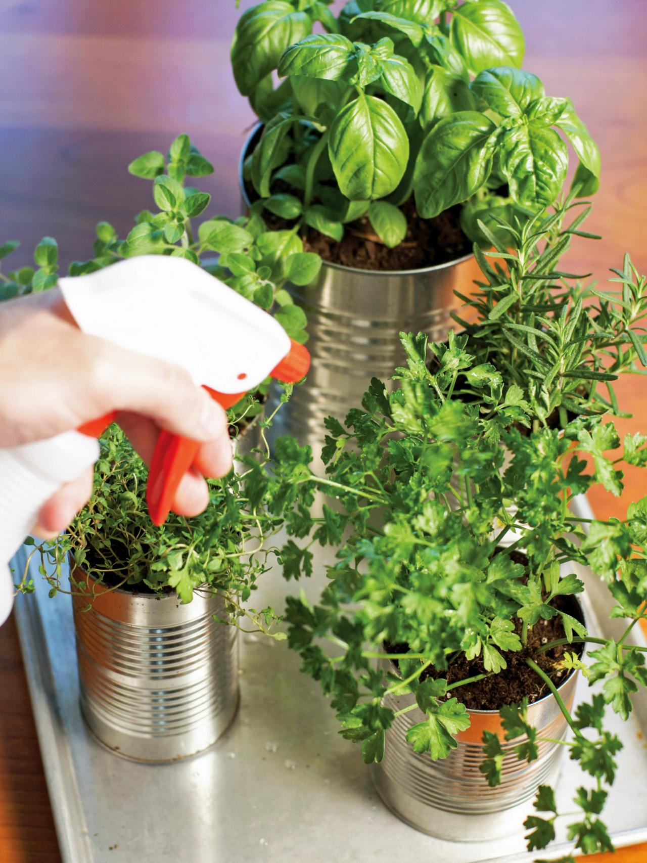 Herb Garden Ideas Designs grow your own kitchen countertop herb garden | hgtv