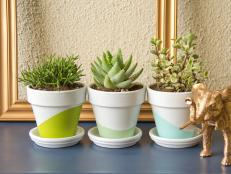 Original_Chelsea-Costa-Potted-Succulents-Beauty1_h