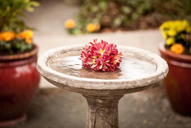 Beautiful Birdbath in Courtyard