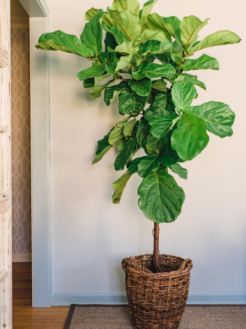 Houseplants guide hgtv Images of indoor plants