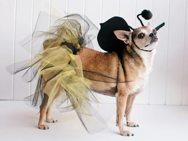 Bumblebee Pet Costume: Beauty