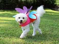 Adorable Dog in Fairy Halloween Costume