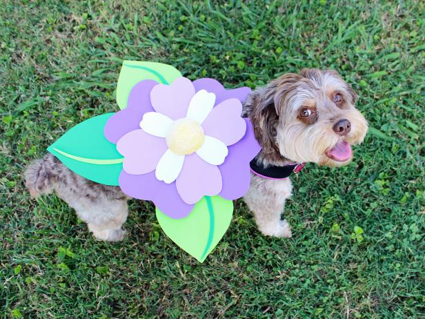 Adorable Dog in Flower Halloween Costume