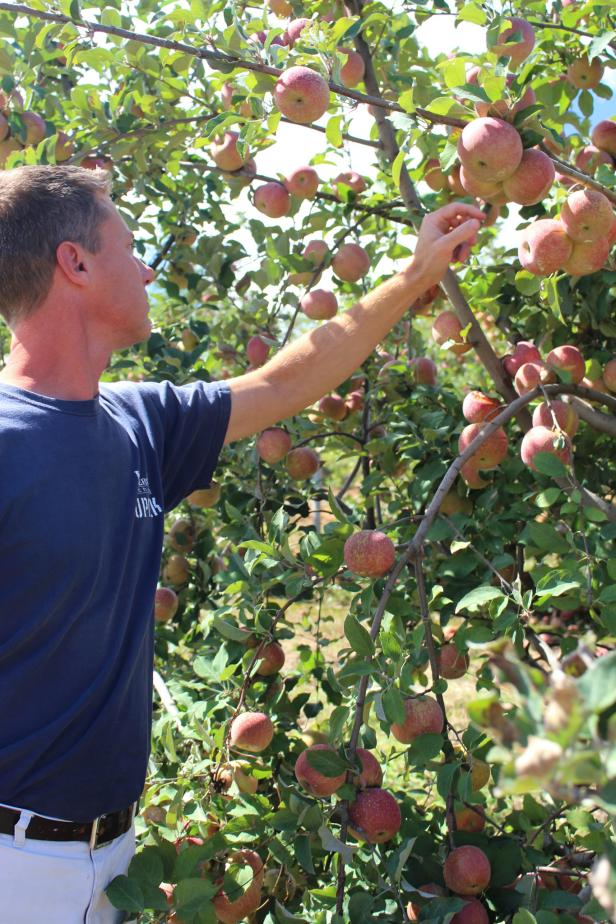 Apple Orchard Farmer