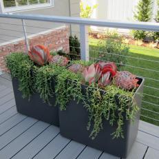 Rectangular Planters on Contemporary Porch