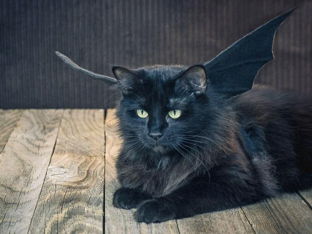 Place the finished bat wings on your pet's back, securing them with the chest strap and by wrapping the extended pipe cleaners loosely around your pet's neck and twisting the ends together. Bend the wings up so they're more visible.