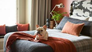 Orange Bedroom With French Bulldog